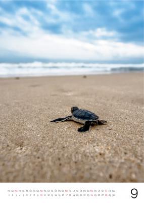 Fotokalendař želva
